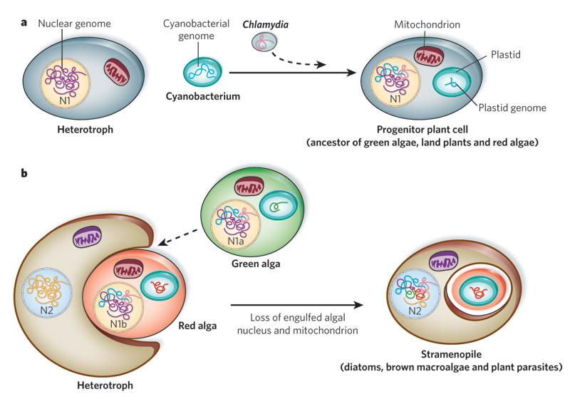 endosymbiosis